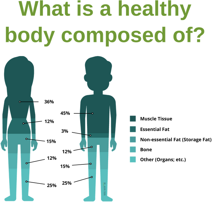Healthy Body Composition Answers